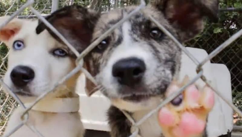 perchè adottare cani dal canile