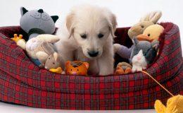 Giochi e giocattoli per cani - come scegliere quello giusto per il vostro cane